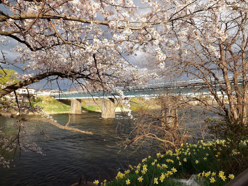 Sous Les Cerisiers En Fleurs Du Japon Le Hanami Les Petits Voyages