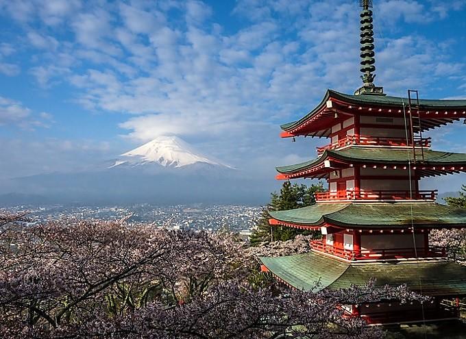 sous les cerisiers en fleurs du japon - le hanami - les petits voyages