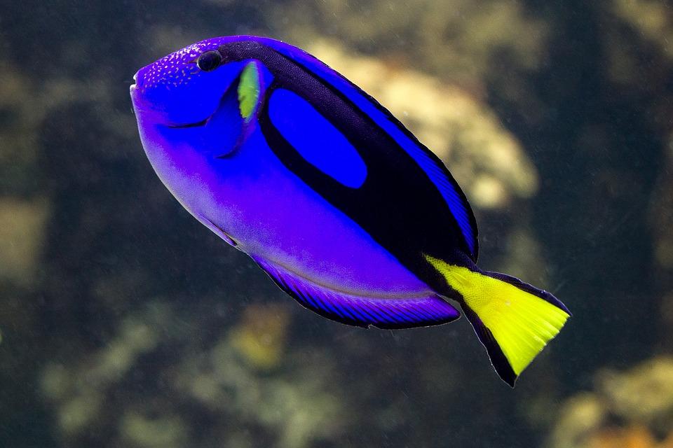 dory oceanopolis
