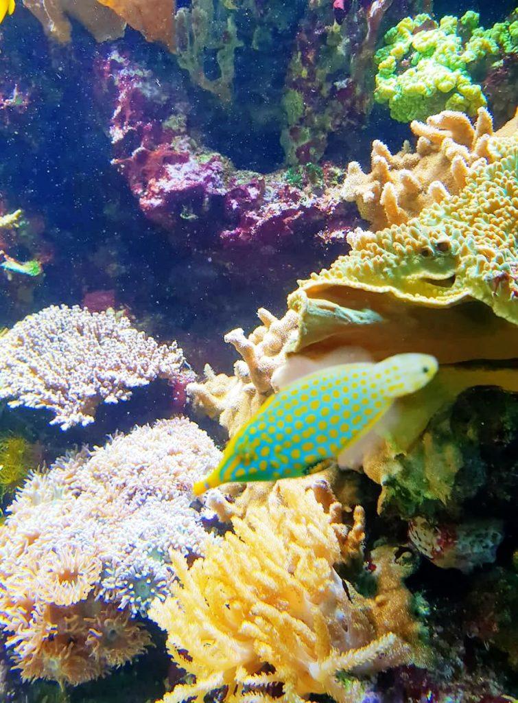 oceanopolis poissons