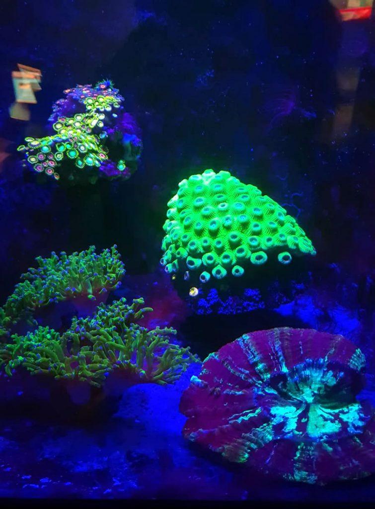 coraux oceanopolis