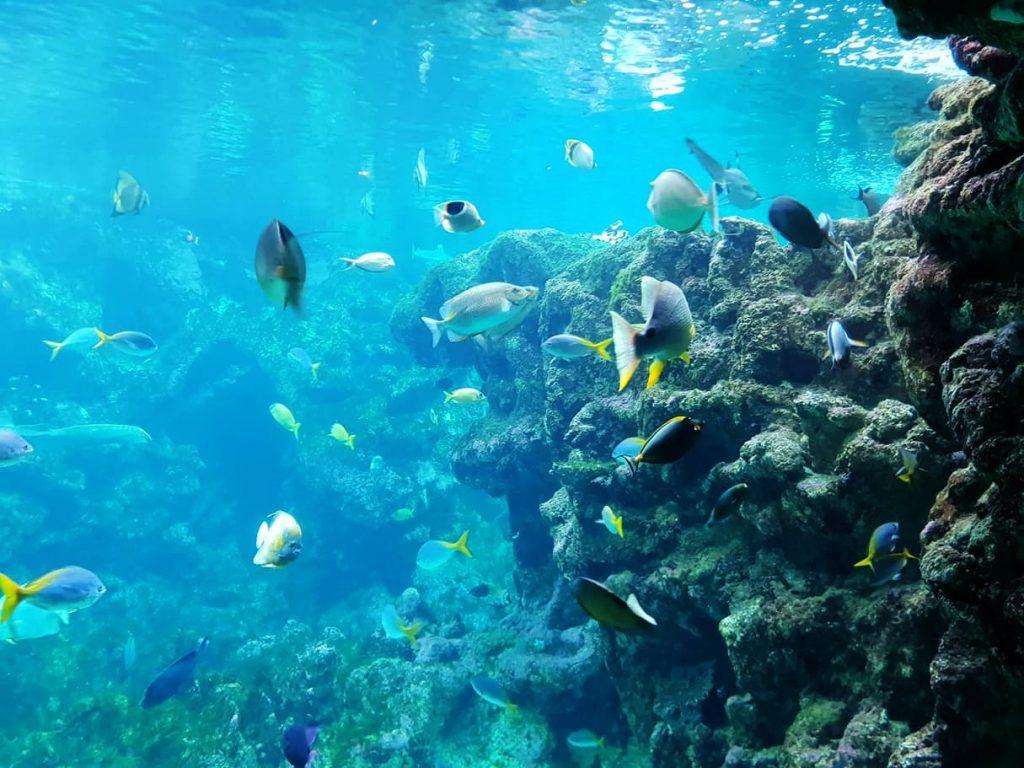 aquarium oceanopolis