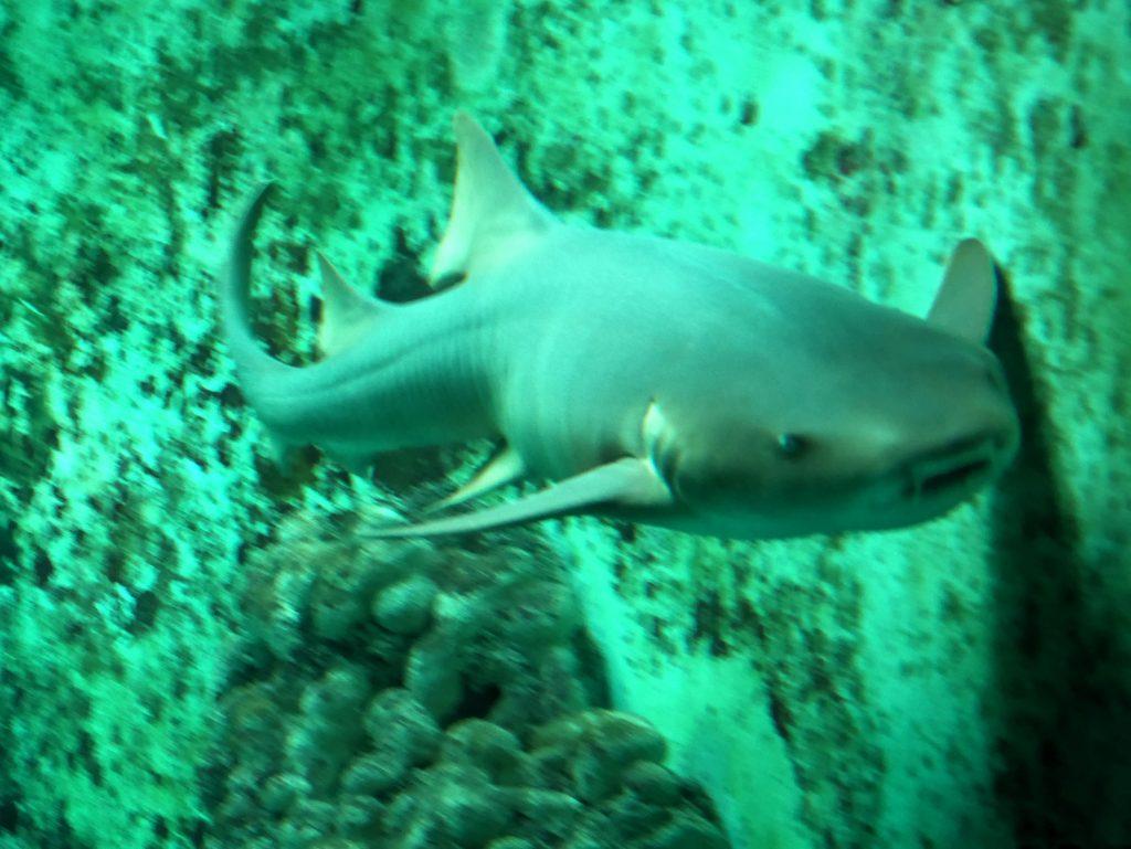 requin oceanopolis