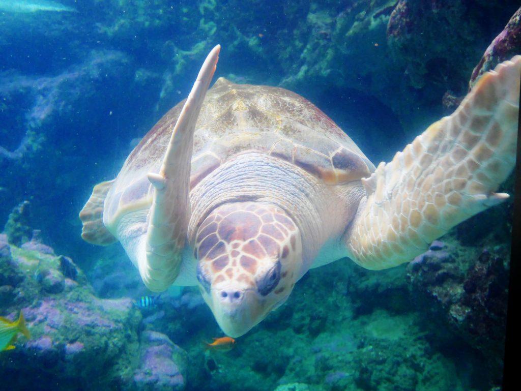 tortue oceanopolis