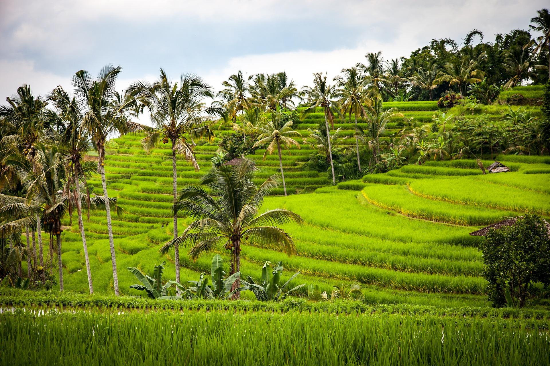 Bali, l'île des Dieux rizieres