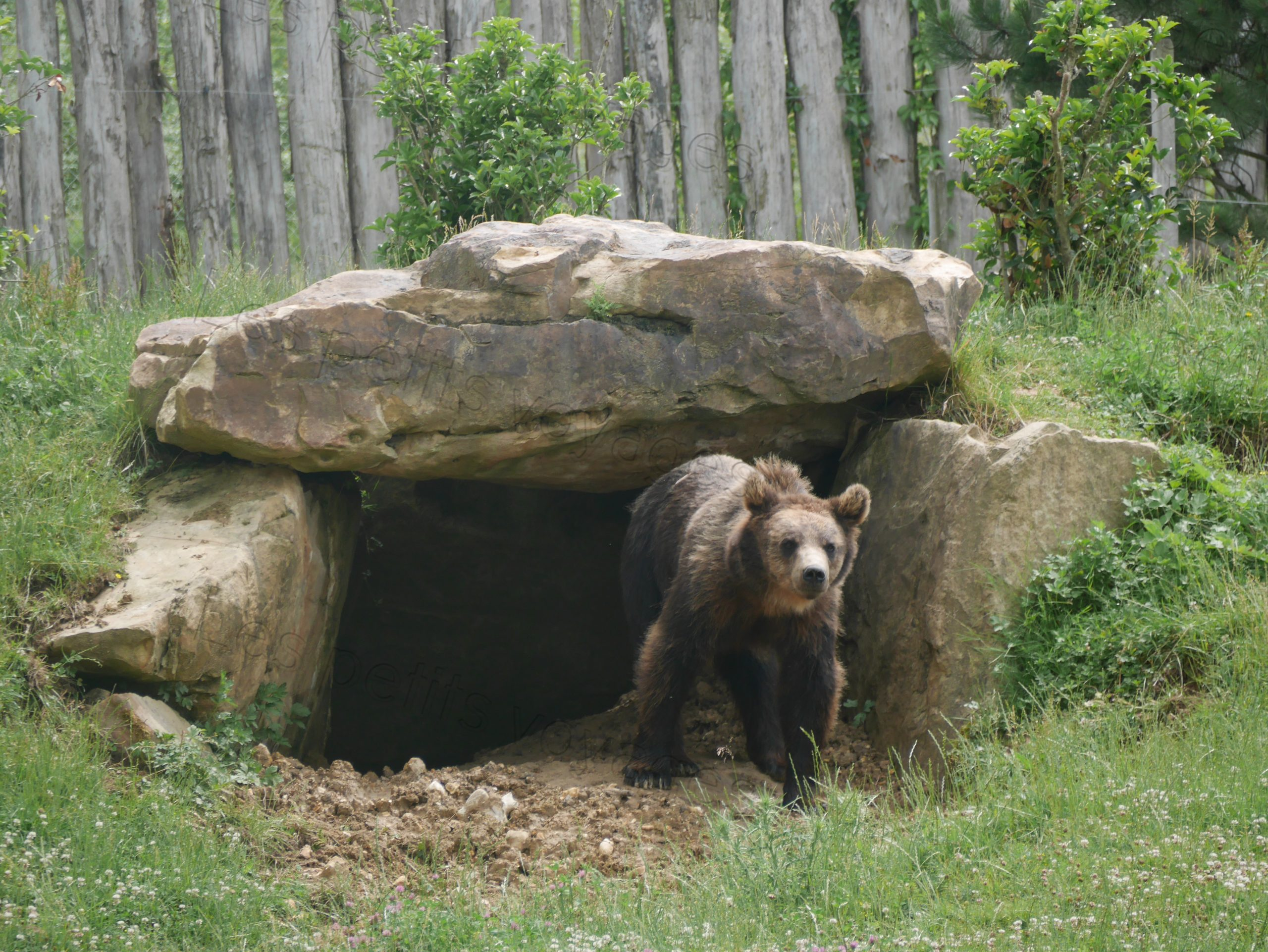 ours zoo beauval